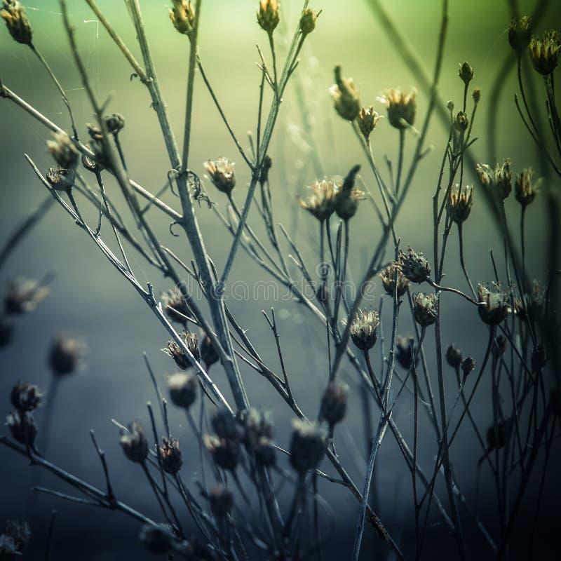 与野花和植物的抽象自然背景 库存照片