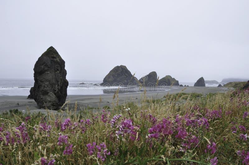 与野花的俄勒冈海岸 库存图片