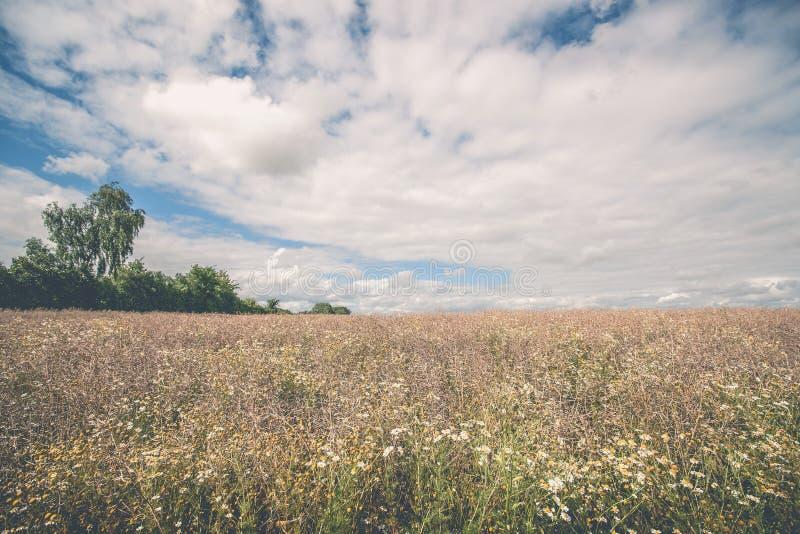 与野花的农村风景 图库摄影