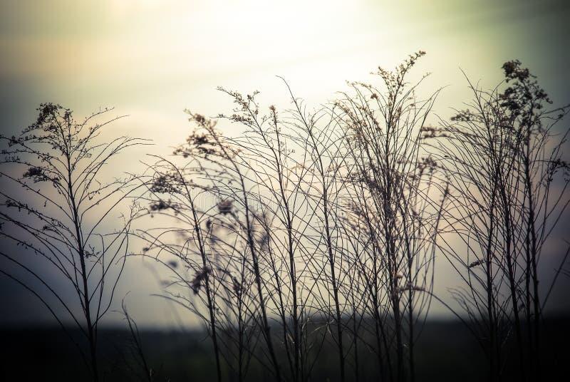 与野花的抽象自然背景 图库摄影
