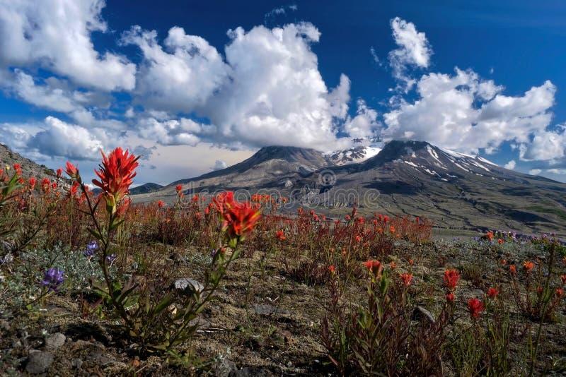 与野花的火山在山麓小丘在一个夏日 库存图片