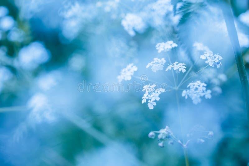 与野花的软的蓝色春天背景 免版税图库摄影