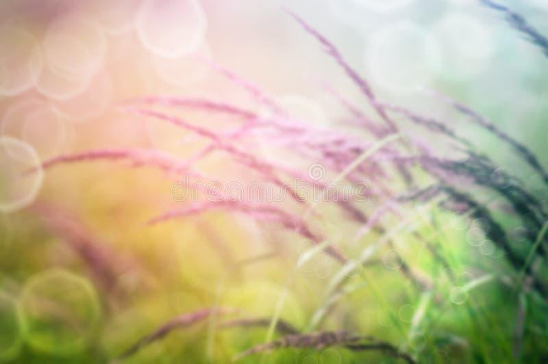 与野草的自然背景 免版税库存照片