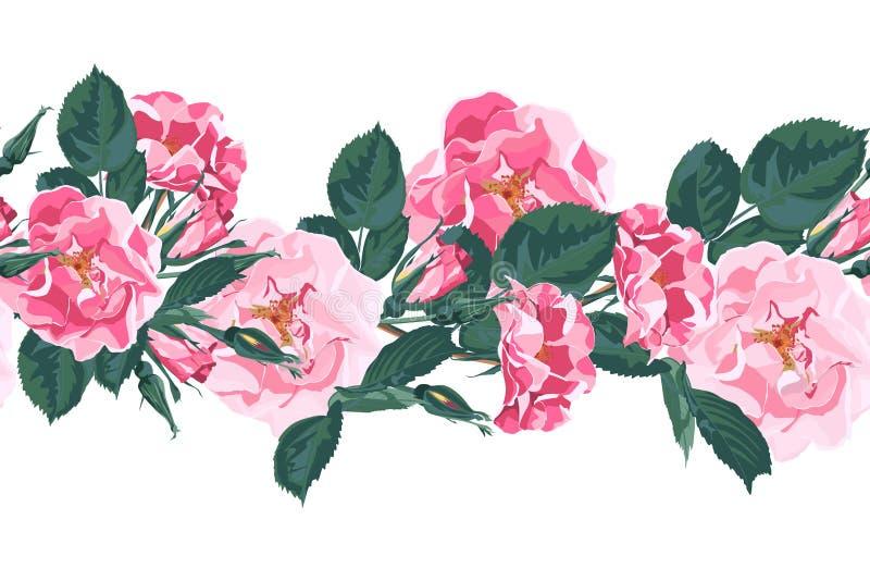 与野蔷薇的传染媒介无缝的样式 野生玫瑰色罗莎canina狗玫瑰园开花 向量例证