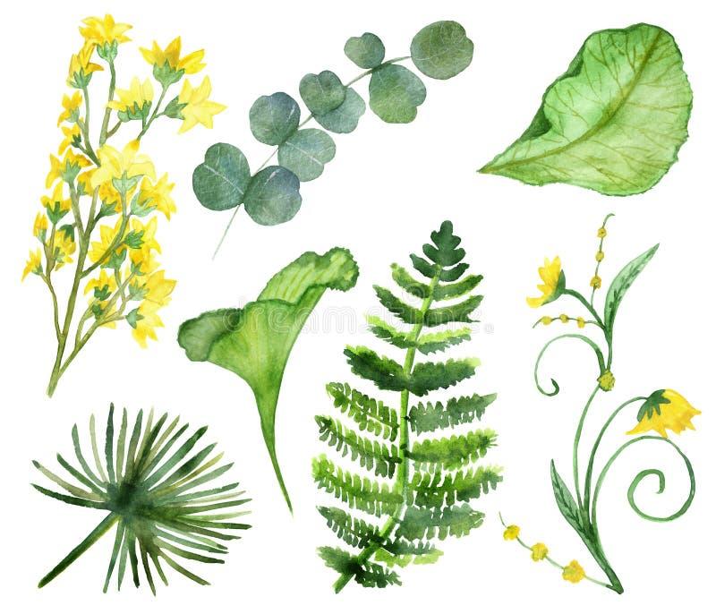 与金合欢和金钱草黄色花的热带落叶收藏  库存例证