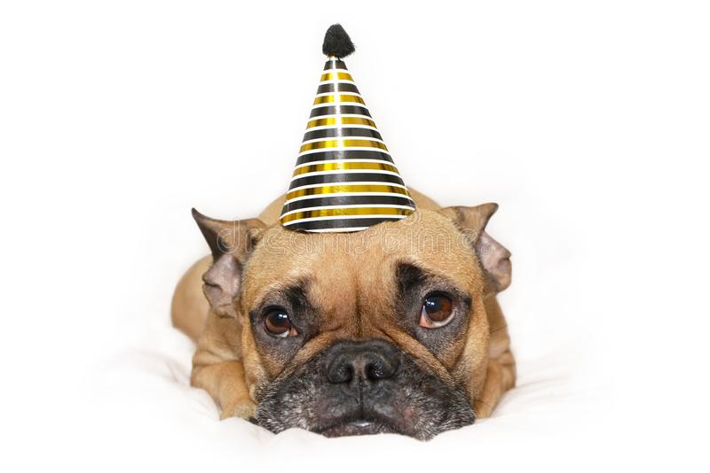 与金子和黑新年聚会帽子的逗人喜爱的小法国牛头犬狗在说谎在白色背景的头 免版税库存图片