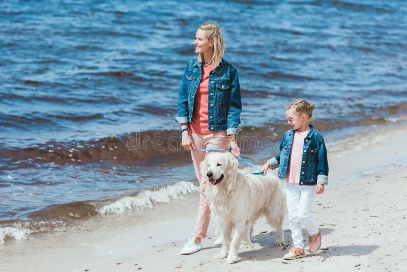 与金毛猎犬狗的美丽的家庭在海附近的步行 免版税库存图片