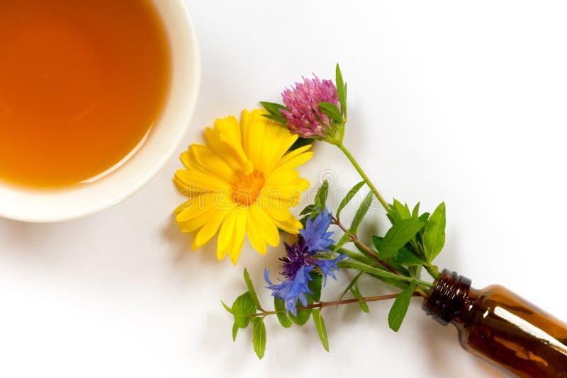 与金盏草、薄菏、三叶草和康乃馨的清凉茶 图库摄影