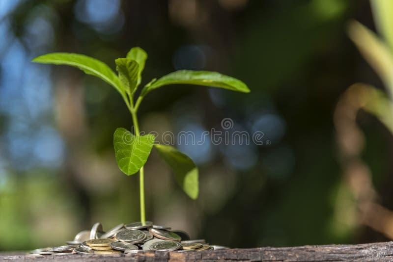 与金钱、攒钱和增长的手的树 图库摄影