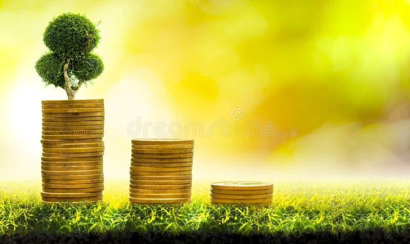 与金钱、攒钱和增长的手的树 免版税库存照片