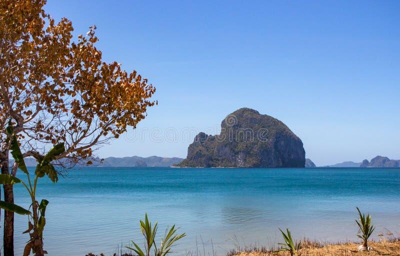 与金黄叶子的树有反对风景海景的小棕榈的 热带风景在秋天 在菲律宾海滩的树 免版税库存照片
