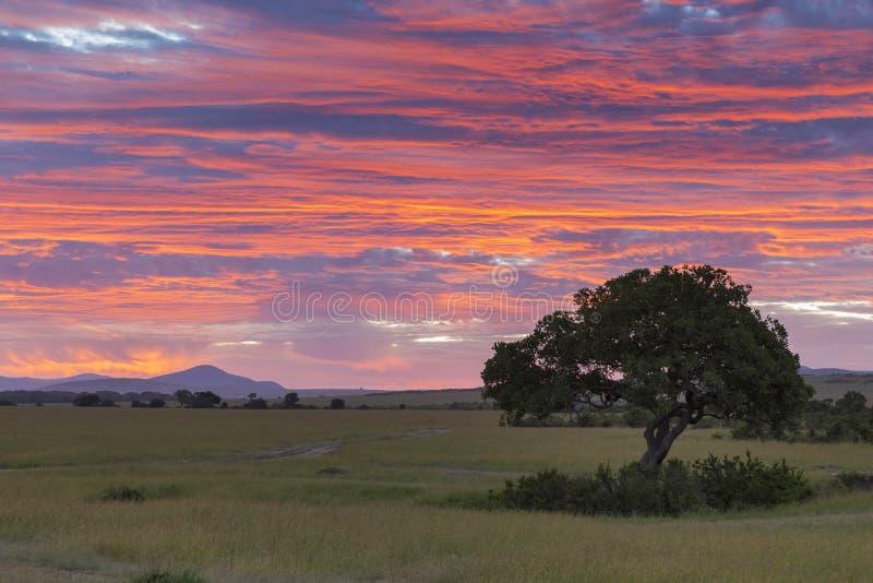 与金黄天空的充满活力的早晨在马赛马拉,肯尼亚,非洲 免版税图库摄影