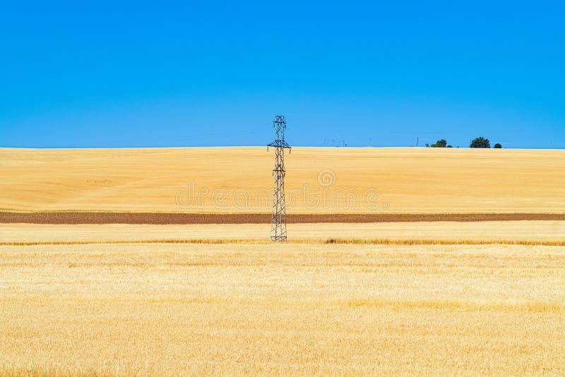 与金黄麦子耳朵的农田 库存照片
