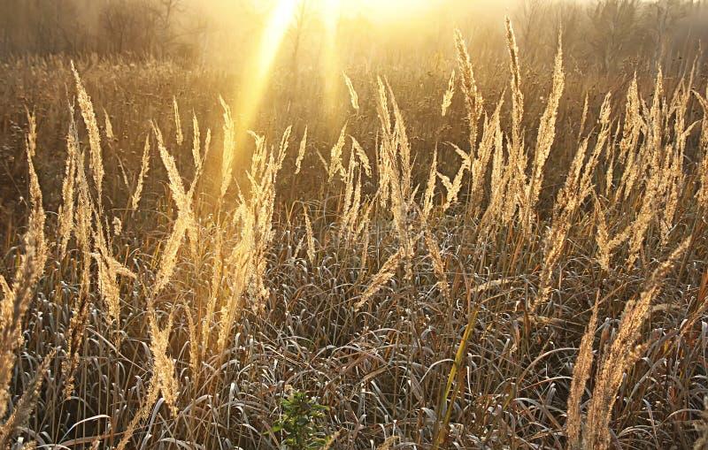 与金黄草的葡萄酒秋天模糊的背景在日落 免版税库存图片