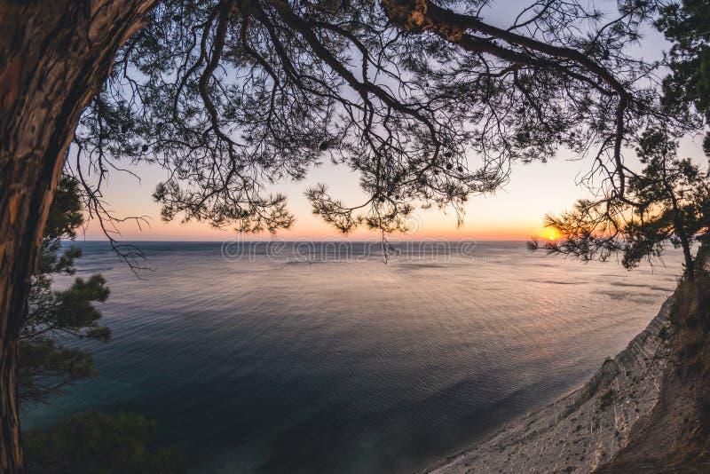与针叶树的海景日落 库存图片
