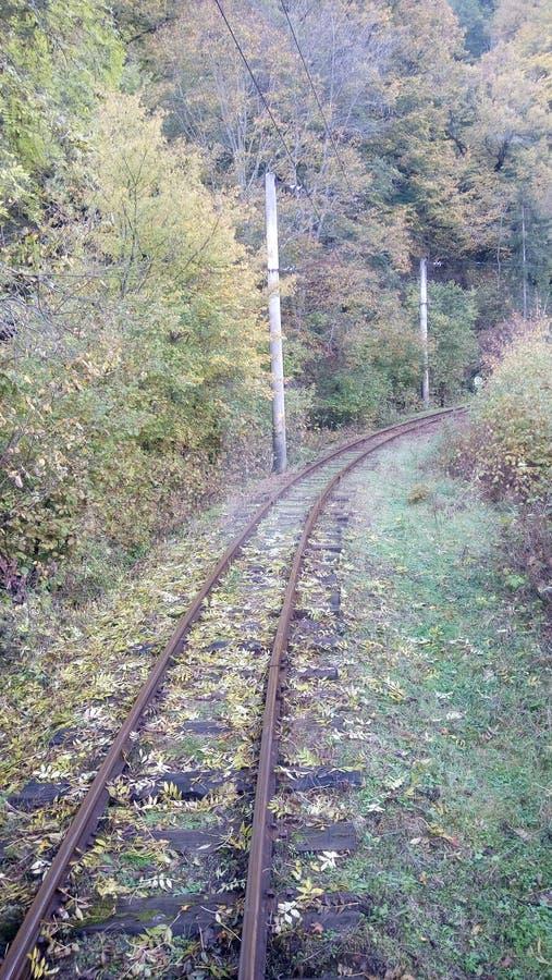 与铁路的风景在森林里 免版税库存照片
