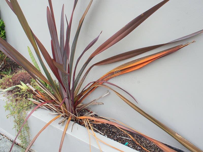 与铁锈红色叶子的灌木 免版税库存照片