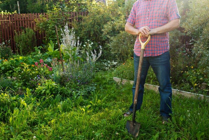与铁锹的工作者身分在庭院里,准备好松开地面 库存图片