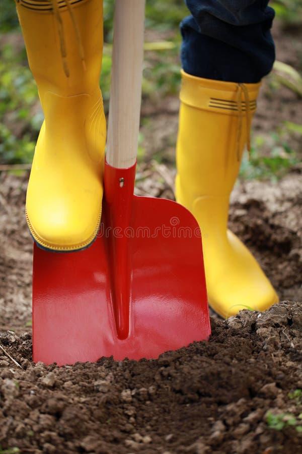 与铁锹的开掘的土壤 库存图片