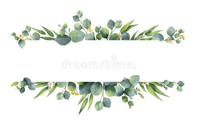 与银元在白色背景和分支的水彩传染媒介绿色花卉横幅隔绝的玉树叶子 皇族释放例证