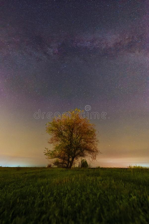 与银河弧的美好的春天风景在草地和偏僻的树 免版税库存照片