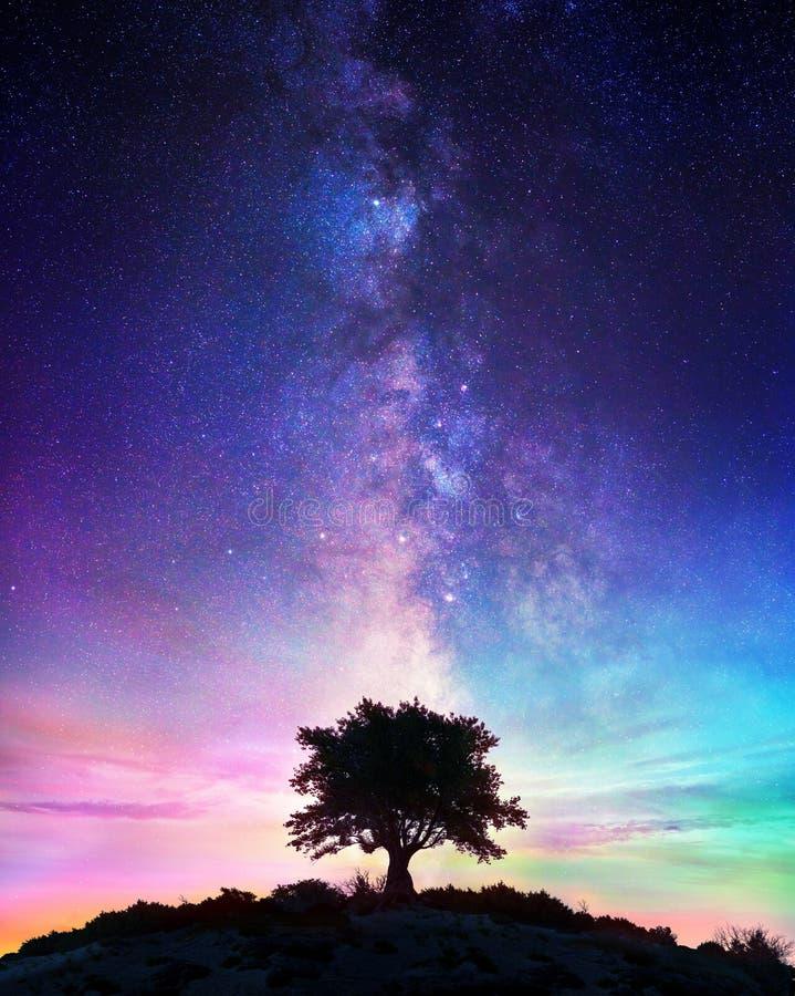 与银河-繁星之夜的偏僻的树 库存照片