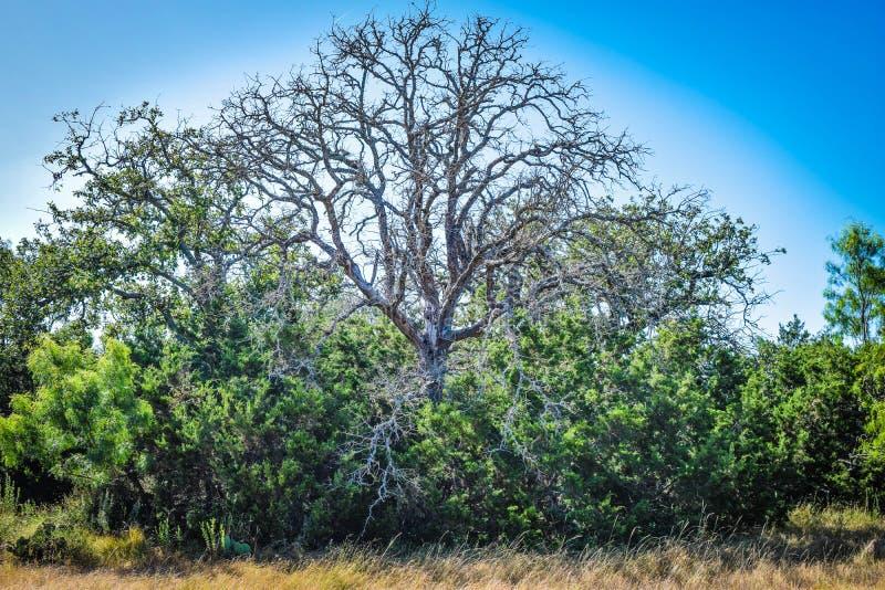 与银色颜色的不可思议的树 图库摄影