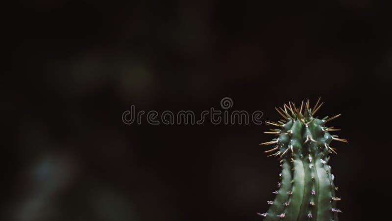 与锋利的刺的仙人掌绿色,拷贝空间抽象沙漠背景 免版税库存图片