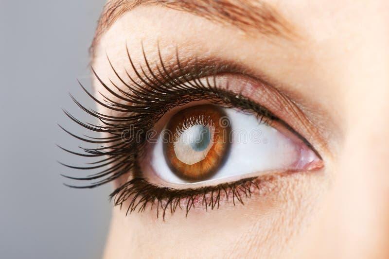 与错误鞭子的妇女棕色眼睛 免版税库存照片