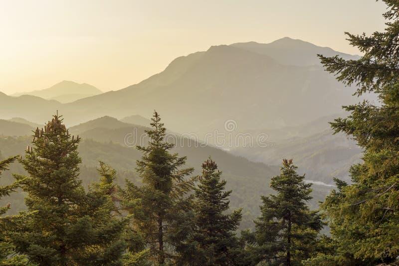 与锥体的巨大的杉木在落日区域Tzoumerka,希腊,山Pindos的光芒的山特写镜头增长 免版税库存照片