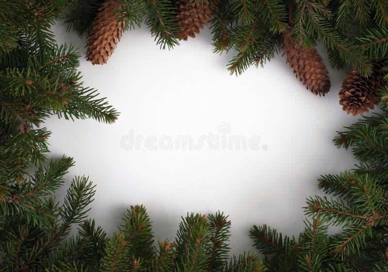 与锥体的您的文本的树枝和地方 免版税图库摄影