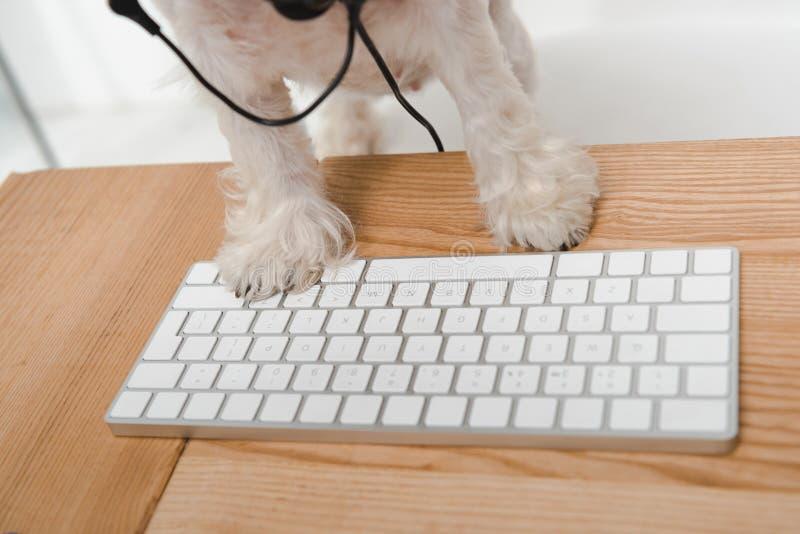 与键盘的狗 免版税库存图片