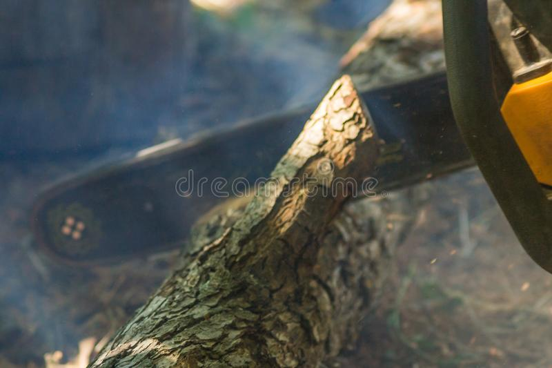与锯的锯切木头 库存照片