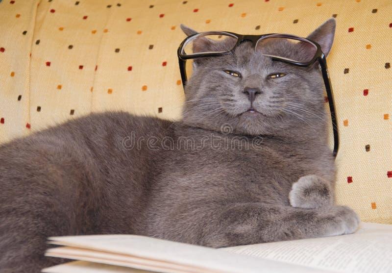 与镜片的滑稽的猫 库存照片