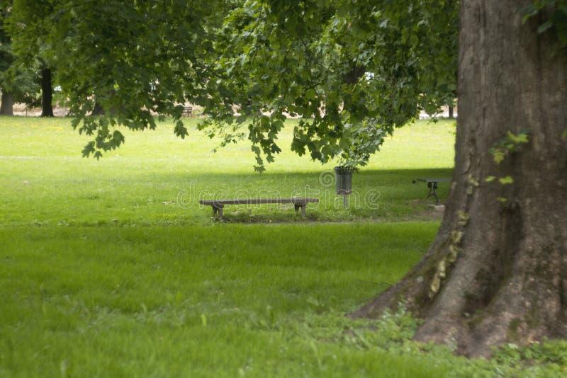 与长凳的大树 免版税图库摄影
