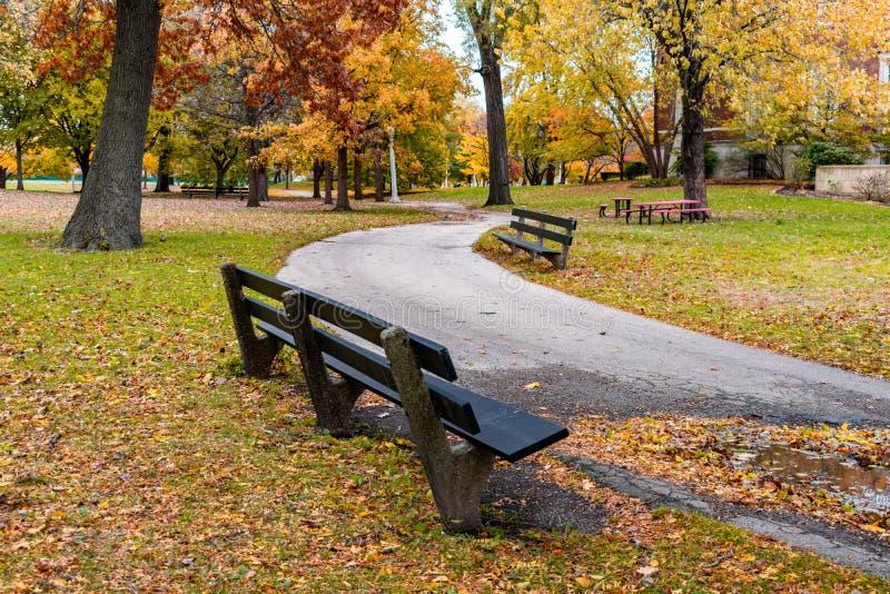 与长凳的绞的足迹在秋天期间的林肯公园芝加哥 库存照片