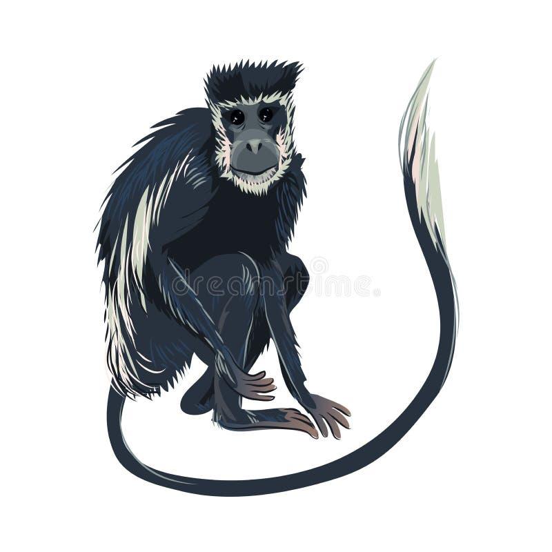 与长发尾巴,密林哺乳动物的蓝色猴子 库存例证