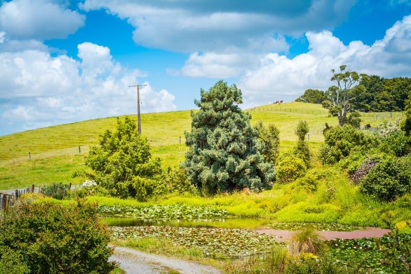 与长得太大的百合池塘的牧人农村风景的倾斜豪华的绿色绵延山 库存图片