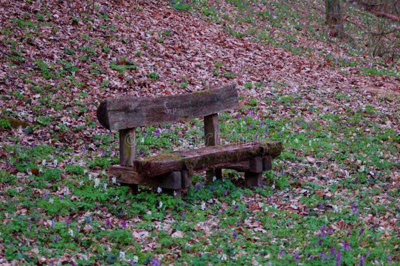 与长木凳的森林休息 免版税图库摄影