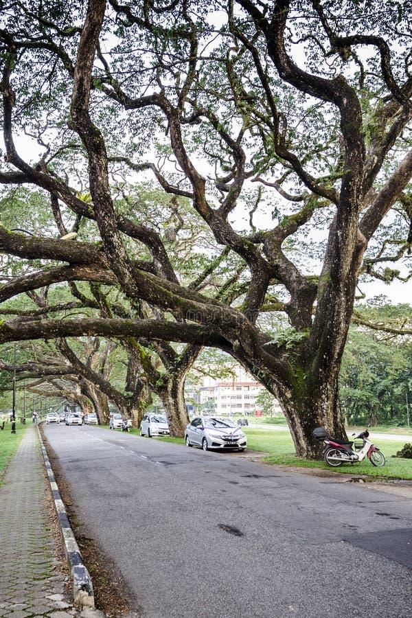 与长的分支的老桦树 库存照片