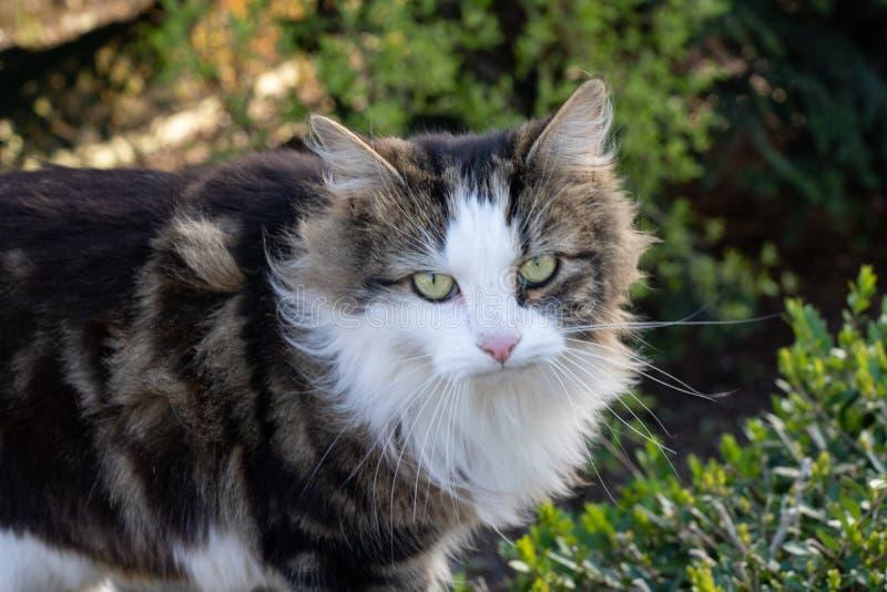 与长的白色颊须的小猫 图库摄影
