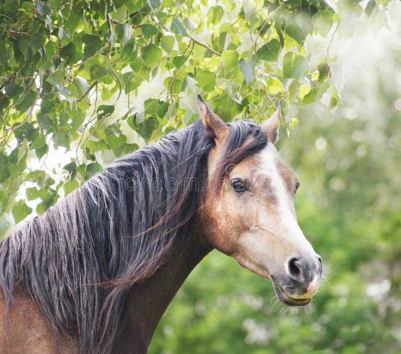 与长的鬃毛的布朗马在太阳和叶子 库存照片