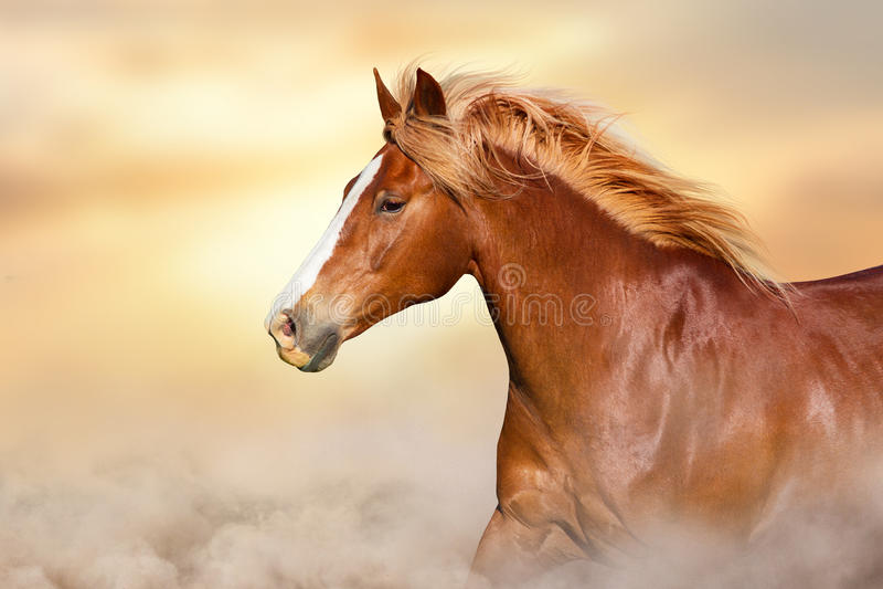 与长的鬃毛的红色马 库存图片