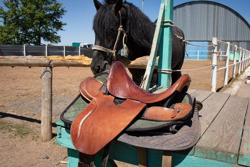 与长的鬃毛的黑阿拉伯马驹,在槽枥附近,仓前空地 免版税库存照片