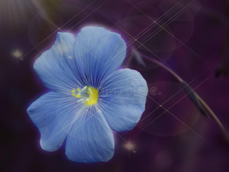 与闪闪发光的童话美丽的特写镜头蓝色花在一张黑暗的背景宏指令照片 免版税库存照片