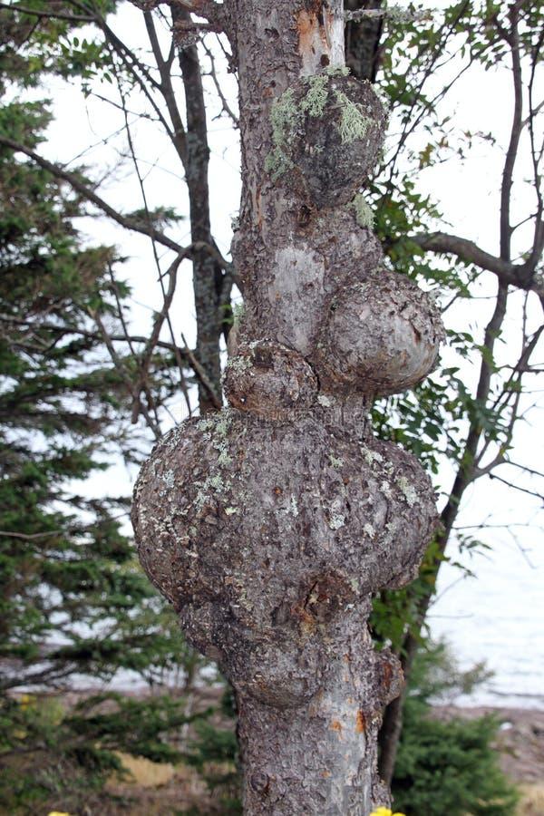 与问题的一棵树 免版税库存图片