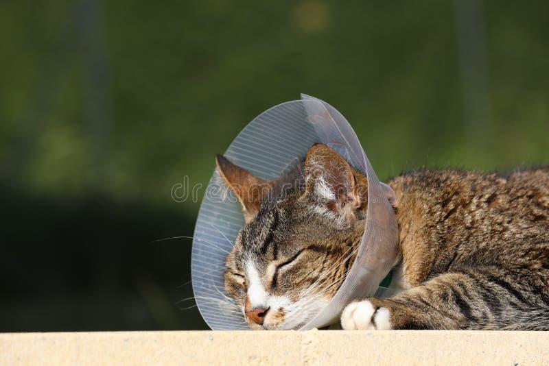与防护衣领的猫 免版税图库摄影
