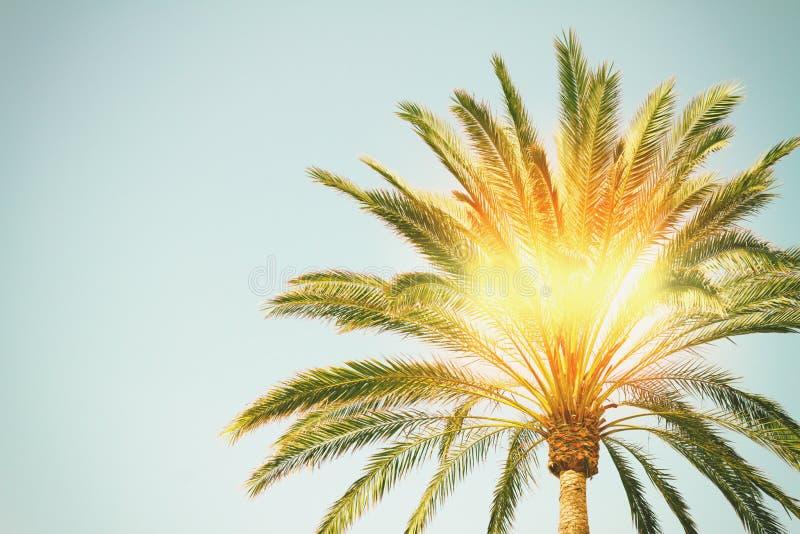 与阳光的棕榈树 库存照片