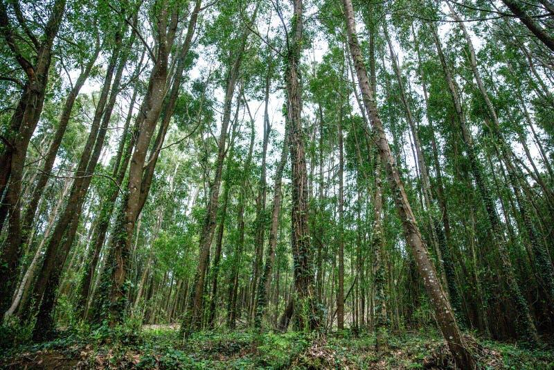 与阳光的绿色林木 图库摄影