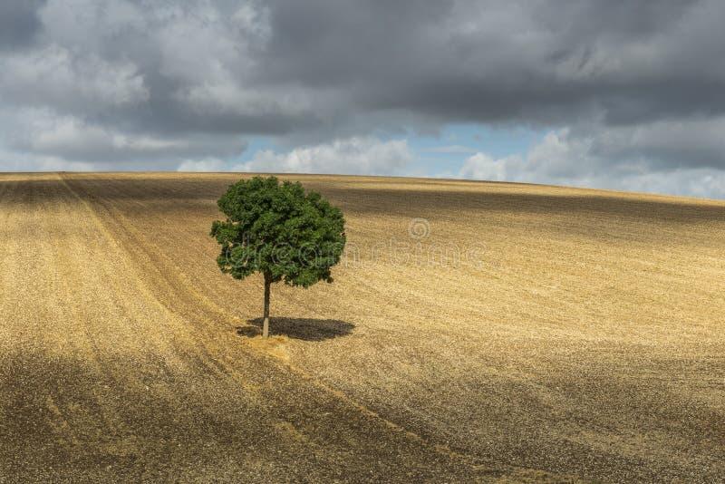 与阴影欧塞尔的偏僻的树 库存照片